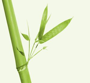 La caña de bambú es el punto de partida de una fibra sumamente virtuosa